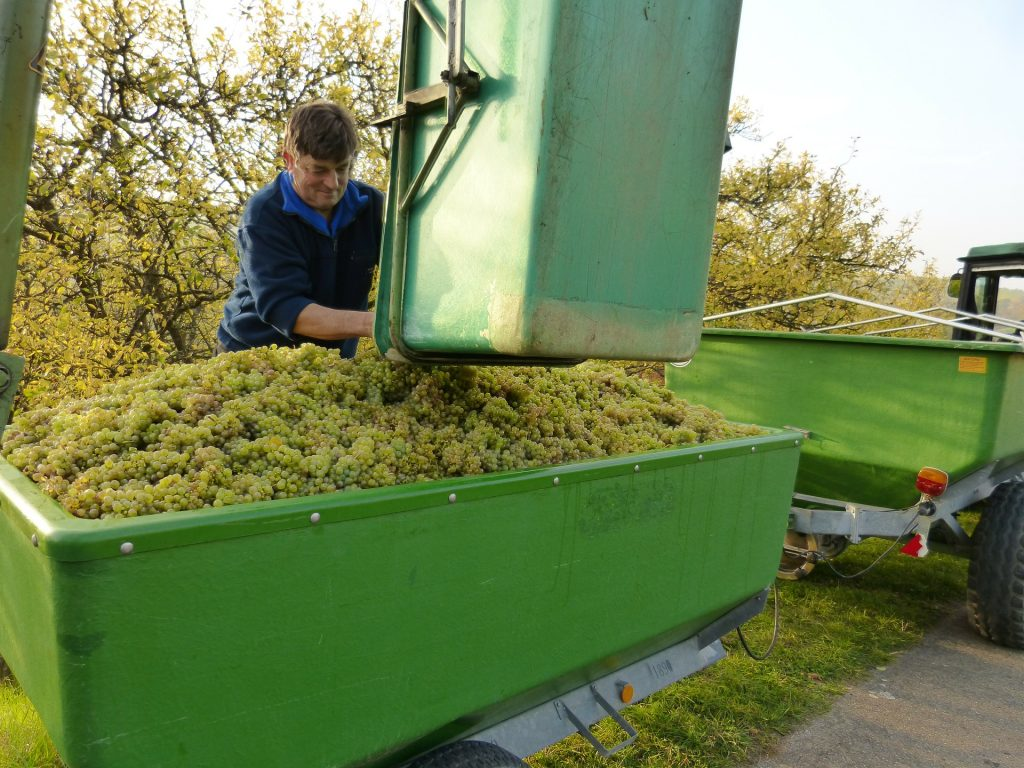 Best Winemaking Traditions in Canada